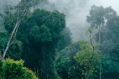 we should protect and preserve our rainforest An estimated 18 million acres (73 million hectares) of forest — roughly the size of panama — are lost each year, according to the united nations' food and agriculture organization this is a tragedy for many reasons and something as global citizens we should take a stand against here are 7.