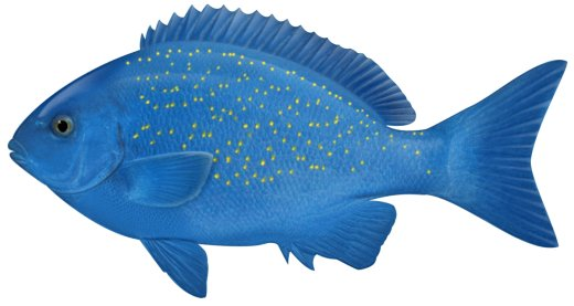 English Exercises Vocabulary For Young Learners What Colour Are The Fish
