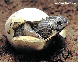 English Exercises A Visit To The Turtles Farm