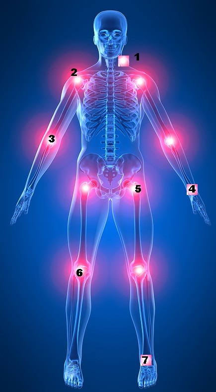 English Exercises The Human Body Joints And Bones