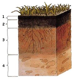 English exercises soil for Soil sentence