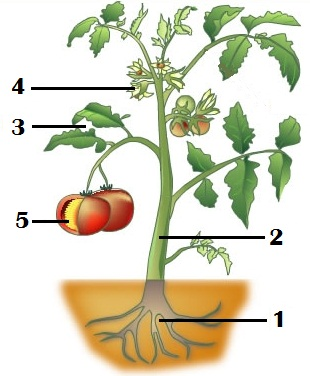 English Exercises: Plants