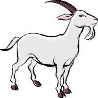 [Obrazek: goat.jpg]